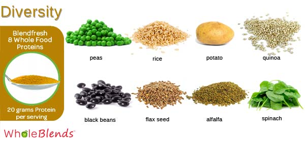8 Plant Based Protein Sources